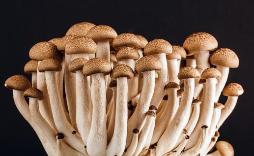 mushroom-fungi-fungus-many-53494